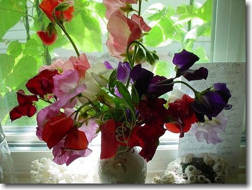 windowsill flowers