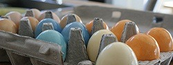 Read more about the article Ideas for an Eco-Friendly Easter