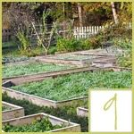 Vegetable Gardens for Every Space