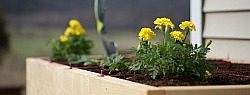 You are currently viewing Growing Your Own Food: Marigolds and Strawberries
