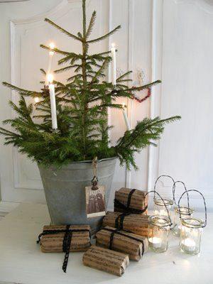 Christmas tree in bucket