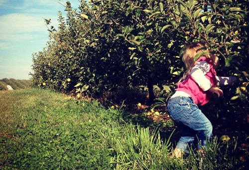 Apple Picking in Winchester, VA