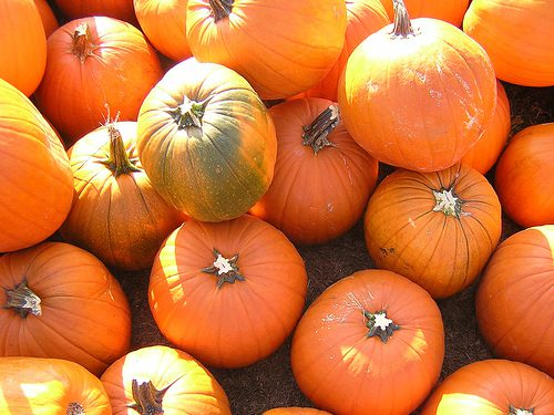 You are currently viewing 7 Uses for Pumpkins and Other Fall Fun!