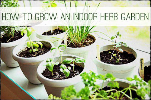 How to grow herbs indoors life your way - Best herbs to grow indoors ...