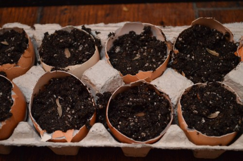 Egg Carton Seed Starters from Simplify Live Love