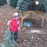 Christmas Trees for Life