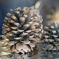 Cinnamon-Scented Pine Cones
