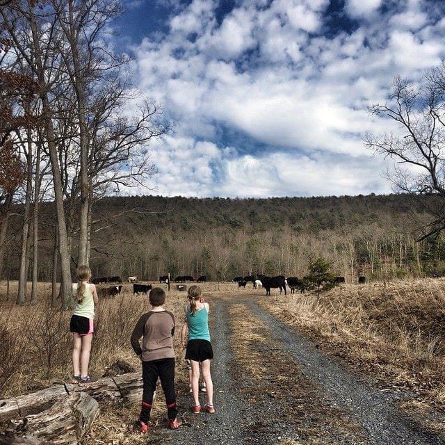 Cows in the neighborhood