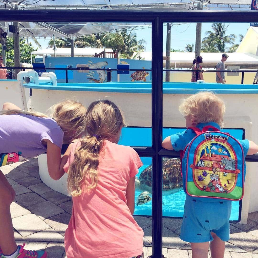 Visiting Loggerhead Marinelife Center