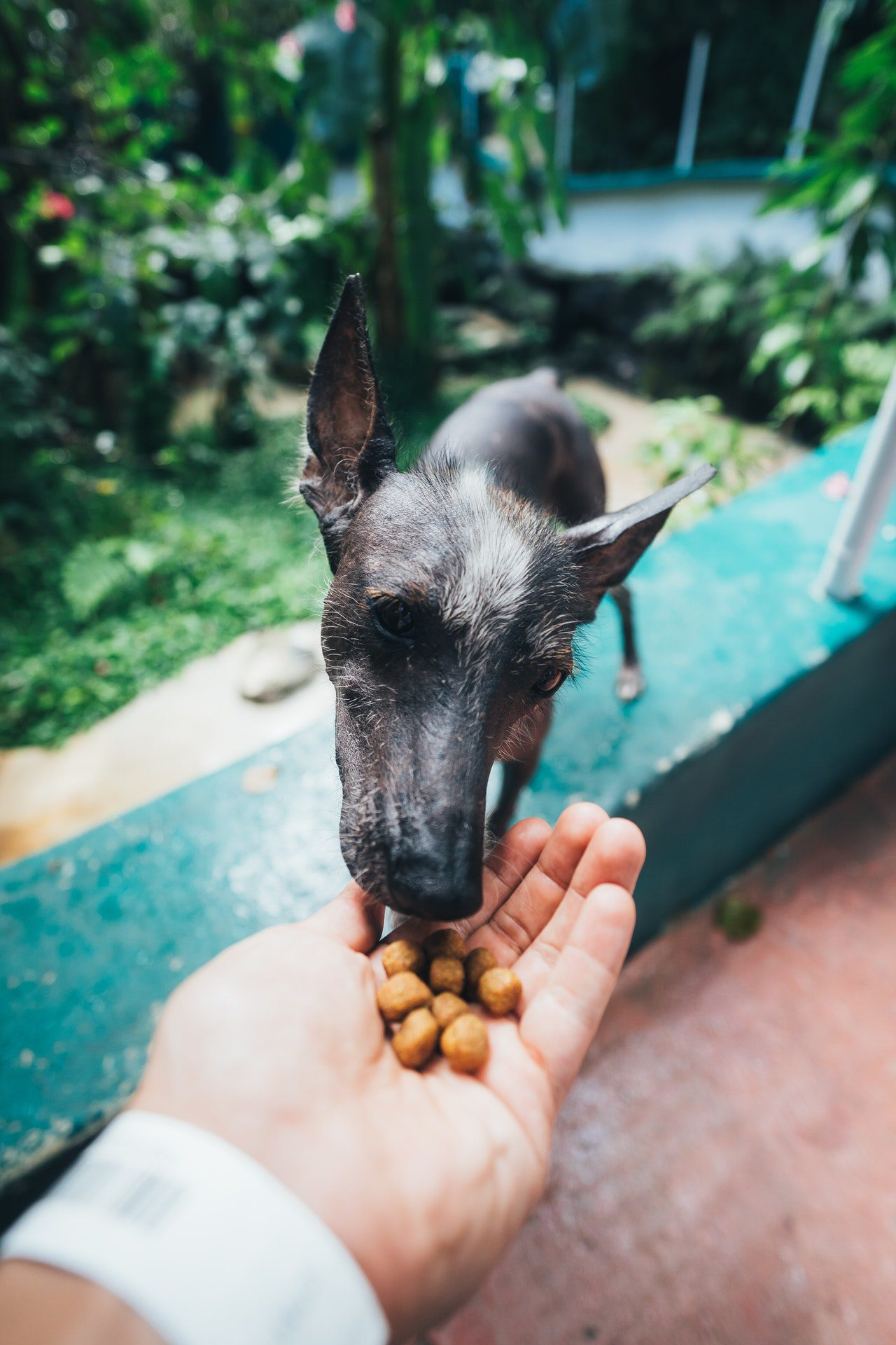 How Your Dog Food Affects Your Dog's Mood
