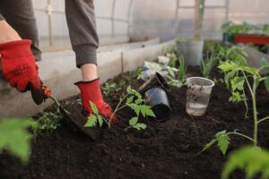 Read more about the article Gardening for Beginners and Fall Planning