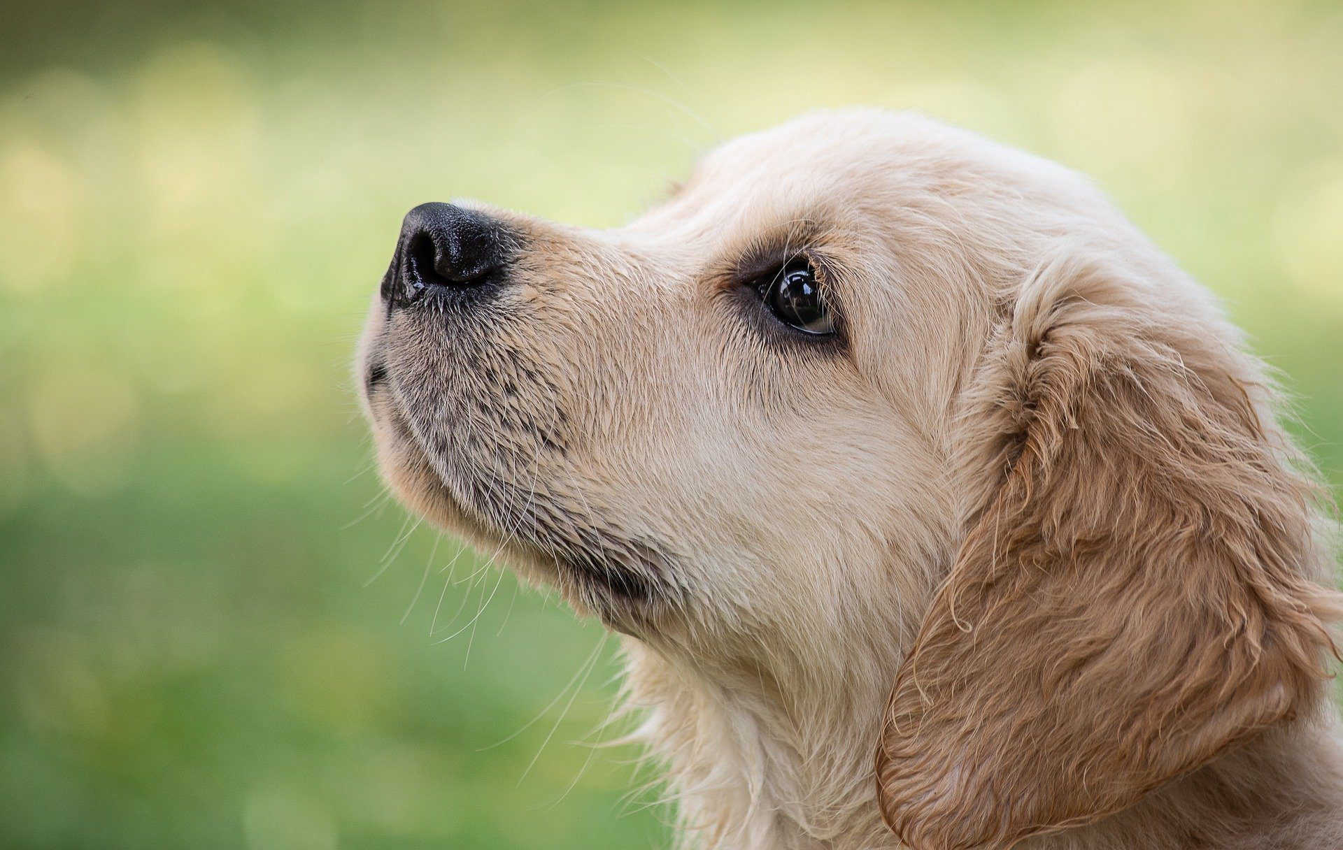 8 Ways to Keep Your Dog Free from Fleas and Ticks