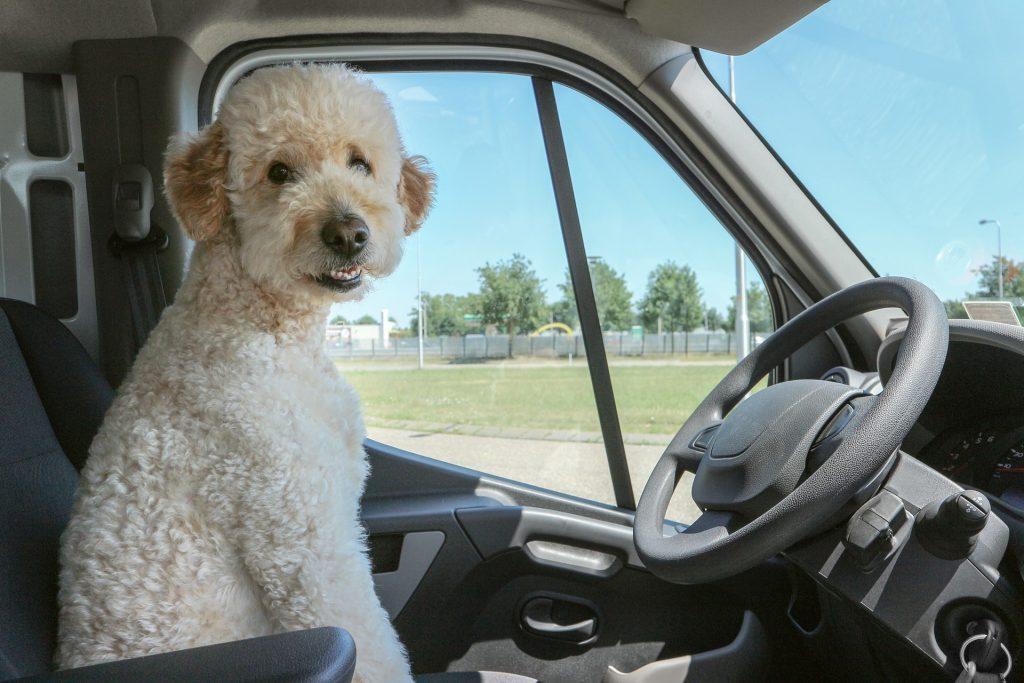 Dog in truck