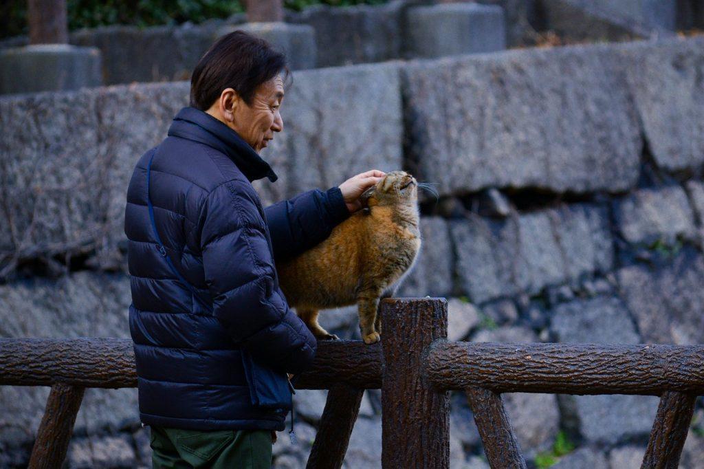 Man petting a cat