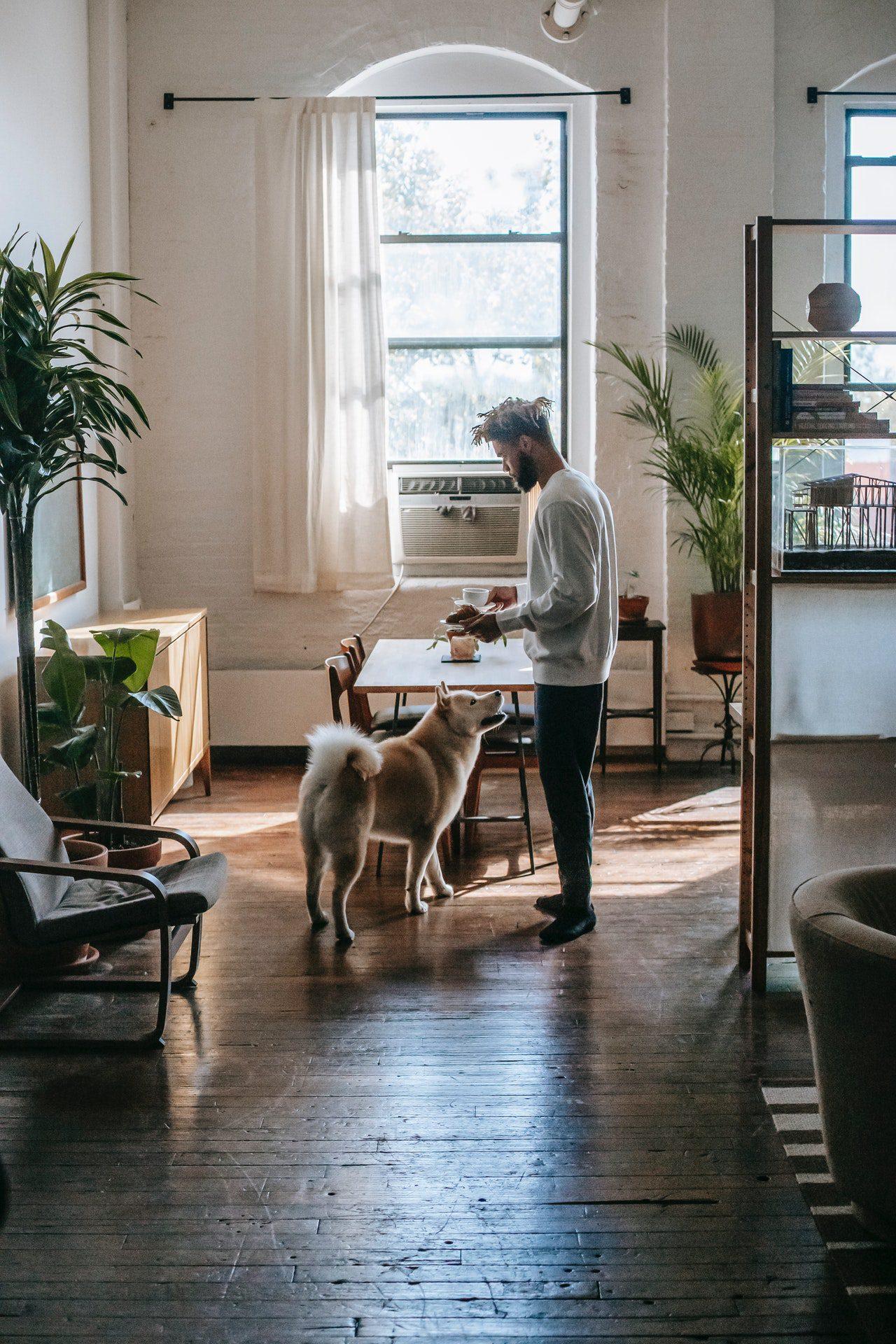 My Dream Zero Waste Apartment Tips