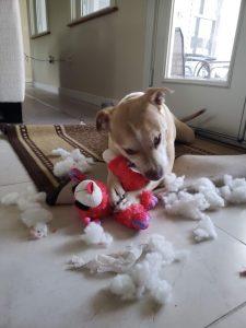 Sugar destroying toy