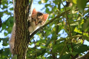 Read more about the article Top Three Reasons Why Your Cat Needs a Healthy Diet
