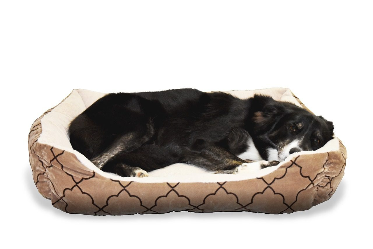 You are currently viewing Do Dogs Dream When They're Sleeping? All Your Questions Answered