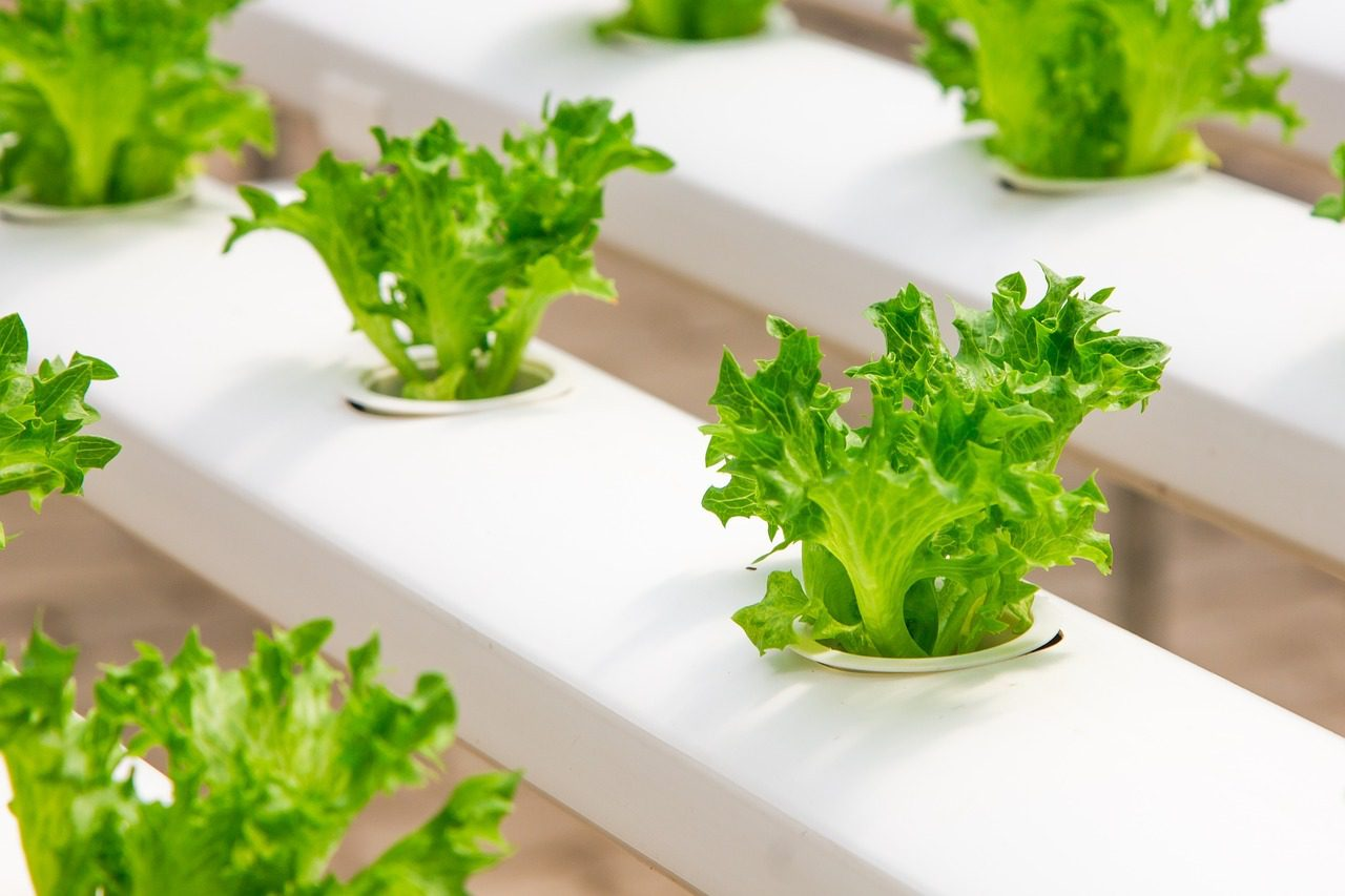 You are currently viewing Top Tips and Benefits to Using Hydroponic Gardening