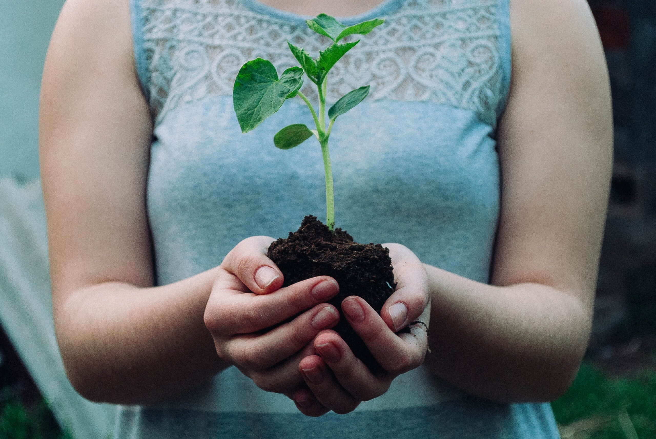You are currently viewing 6 Things That Your Plants Need To Thrive And Grow Healthily