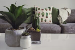 Read more about the article 7 Plant-Care Tips to Growing Succulents Indoors