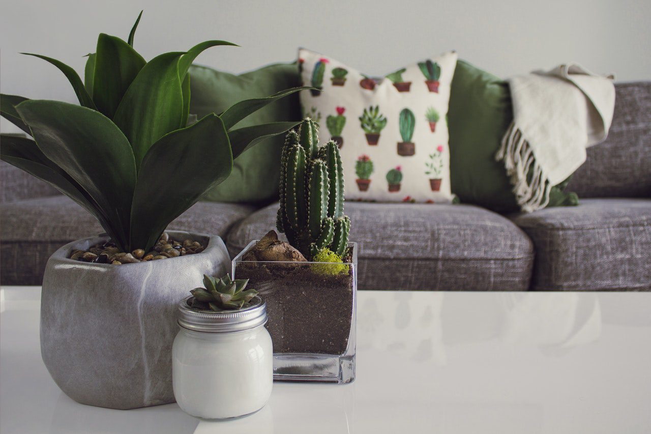You are currently viewing 7 Plant-Care Tips to Growing Succulents Indoors