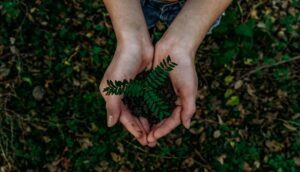 Read more about the article The Top Ways to Educate Yourself About the Environment