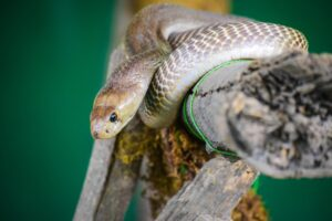 Read more about the article How to Make Sure That Your Snake Is Happy and Healthy