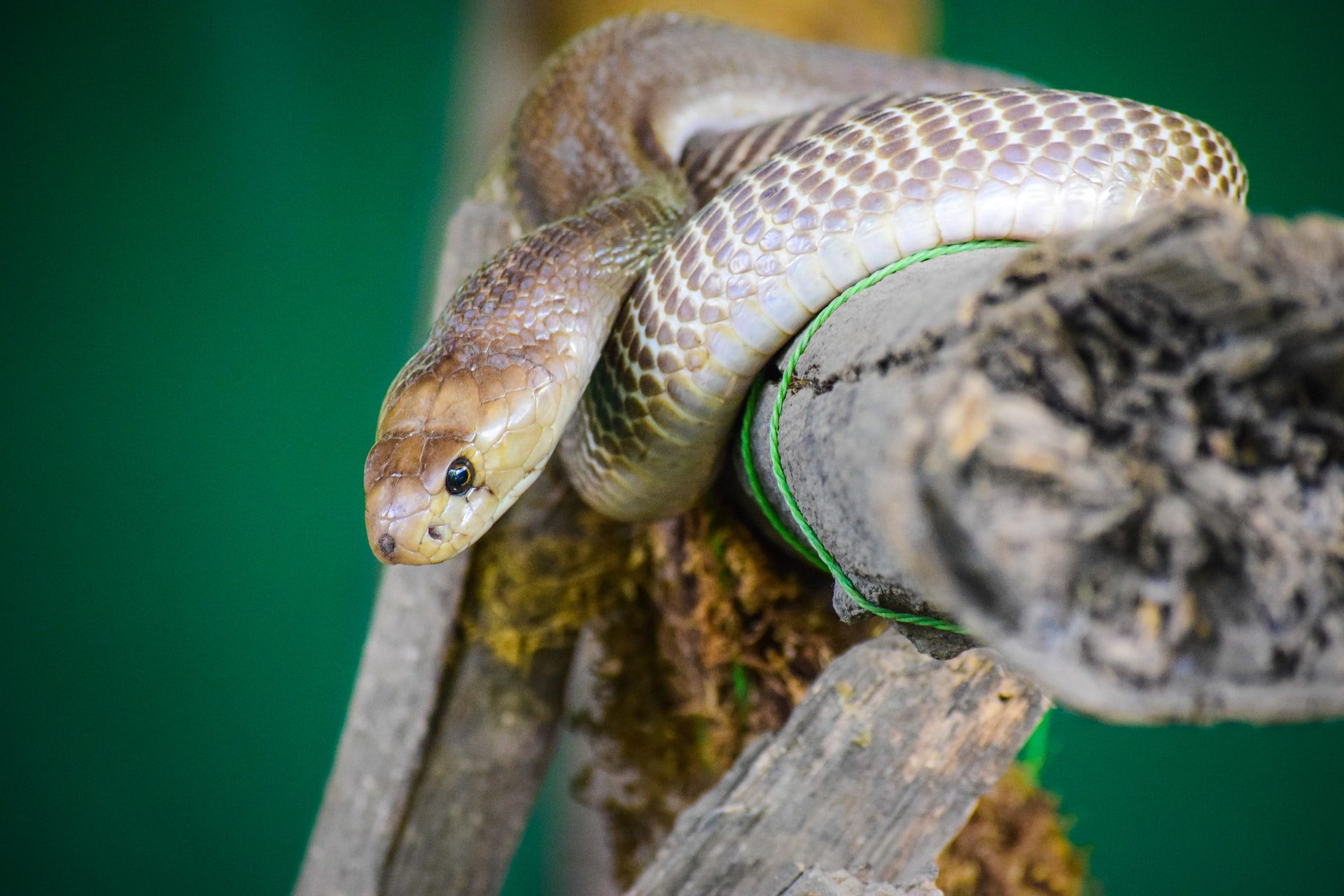 You are currently viewing How to Make Sure That Your Snake Is Happy and Healthy