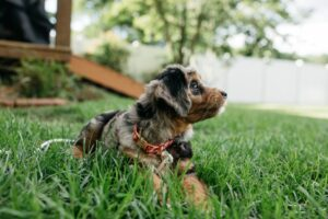 Read more about the article Small Dog Breeds That are Perfect for Small Apartments