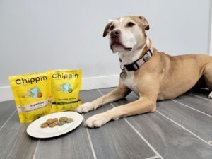 Read more about the article Chippin: Rethink the Food Standards for Your Canine Friend