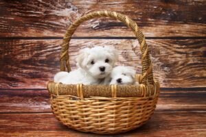 Read more about the article Breeder, Pound or Rescue – Where to Go for A Puppy