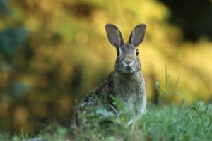Read more about the article Rabbit Meat Nutrition: Calories and Health Value