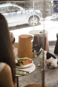 Read more about the article 4 Excellent Giveaway Ideas for Pet-Friendly Establishments