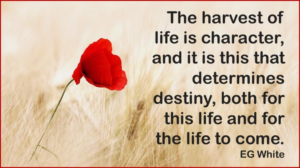Harvest of life.jpg