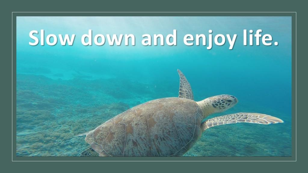 Slow Down-1.jpg