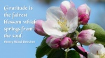 Gratitude blossoms.jpg